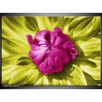 Glas schilderij Macro | Roze, Groen, Wit
