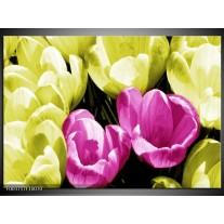 Glas schilderij Krokus | Roze, Groen, Wit