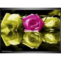 Glas schilderij Roos | Paars, Groen, Wit