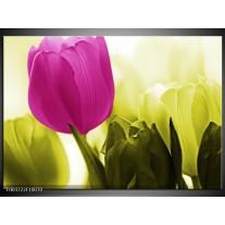 Foto canvas schilderij Tulp   Roze, Groen, Wit