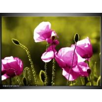 Foto canvas schilderij Klaproos | Roze, Groen, Wit