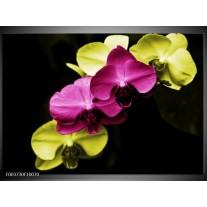 Glas schilderij Orchidee | Roze, Groen, Zwart