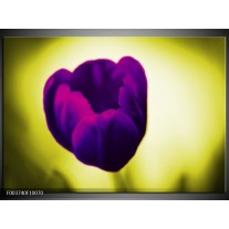 Foto canvas schilderij Tulp | Paars, Groen, Wit