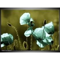 Glas schilderij Klaproos | Blauw, Zwart, Groen