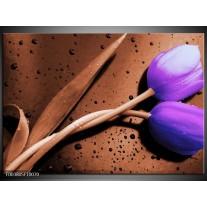 Foto canvas schilderij Tulp | Paars, Bruin, Wit