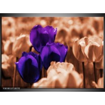 Glas schilderij Tulp | Paars, Bruin, Wit