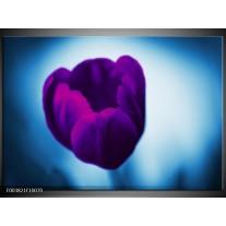 Foto canvas schilderij Tulp   Paars, Blauw, Wit