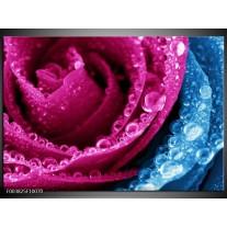 Glas schilderij Roos | Roze, Blauw