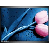 Glas schilderij Tulp | Roze, Blauw