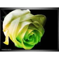 Glas schilderij Roos | Geel, Groen, Zwart