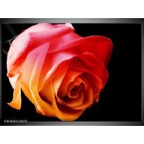Glas schilderij Roos | Oranje, Rood, Zwart