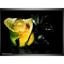 Glas schilderij Roos   Geel, Zwart