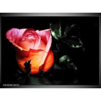 Foto canvas schilderij Roos | Roze, Zwart, Oranje