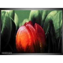 Foto canvas schilderij Tulp | Rood, Groen, Zwart