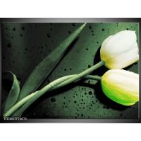 Foto canvas schilderij Tulp | Groen, Geel, Zwart