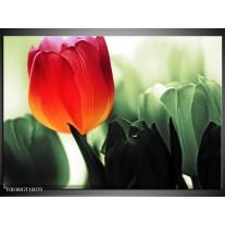 Glas schilderij Tulp | Rood, Groen, Zwart