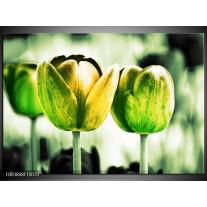 Glas schilderij Tulp   Geel, Groen, Wit