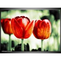 Foto canvas schilderij Tulp | Rood, Groen, Wit