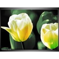 Foto canvas schilderij Tulp | Geel, Groen, Wit