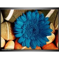 Foto canvas schilderij Bloem | Blauw, Oranje, Grijs