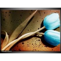 Glas schilderij Tulp | Blauw, Wit, Bruin