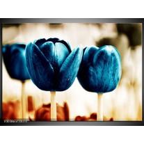 Glas schilderij Tulp | Blauw, Wit, Grijs