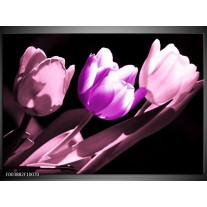 Foto canvas schilderij Tulp   Paars, Wit, Zwart