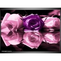 Glas schilderij Roos | Paars, Wit, Zwart