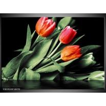 Glas schilderij Tulp | Rood, Oranje, Groen