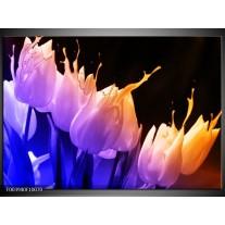 Foto canvas schilderij Tulp | Oranje, Paars, Blauw