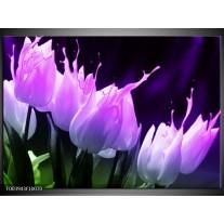 Glas schilderij Tulp | Paars, Zwart, Roze
