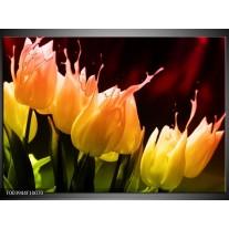 Glas schilderij Tulp | Oranje, Geel, Zwart