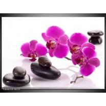 Glas schilderij Orchidee | Paars, Wit, Zwart