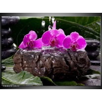 Glas schilderij Orchidee | Zwart, Roze, Grijs