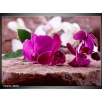 Foto canvas schilderij Orchidee | Groen, Paars, Zwart