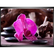 Glas schilderij Orchidee | Paars, Zwart, Bruin