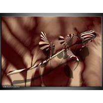 Glas schilderij Roos | Bruin, Wit