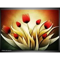 Glas schilderij Tulp | Geel, Wit, Rood