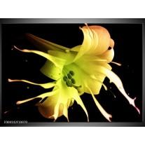 Glas schilderij Bloem | Zwart, Geel, Groen