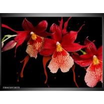 Glas schilderij Orchidee | Roze, Rood, Zwart,