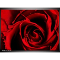 Foto canvas schilderij Roos | Rood, Zwart