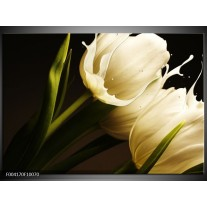 Foto canvas schilderij Tulp | Wit, Groen, Zwart