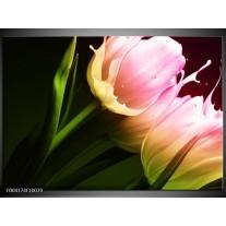 Glas schilderij Tulp | Groen, Roze, Zwart