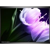 Glas schilderij Tulp | Groen, Paars, Zwart