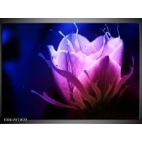 Glas schilderij Tulp | Blauw, Paars, Roze