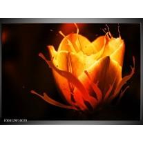 Glas schilderij Tulp | Oranje, Zwart, Geel