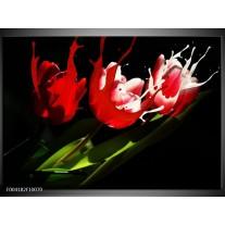 Foto canvas schilderij Tulp | Rood, Wit, Zwart