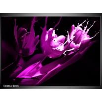 Glas schilderij Tulp   Paars, Wit, Zwart