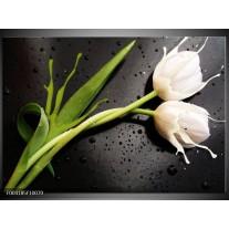 Glas schilderij Tulp | Grijs, Groen, Wit