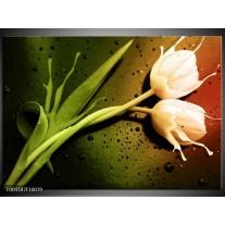 Glas schilderij Tulp | Groen, Wit, Bruin
